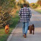 Köpek Kovalaması