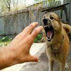 Köpek Saldırması