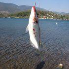 Balık Yakalamak