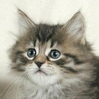 Kediye Basmak