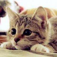Kediye Et Vermek