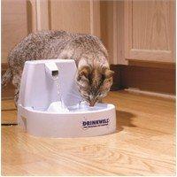 Kediye Su Vermek