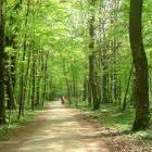 Ağaçlık Yol