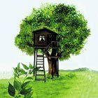 Çitlembik Ağacı
