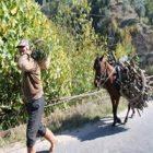 Odun Taşımak