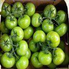 Yeşil Domates